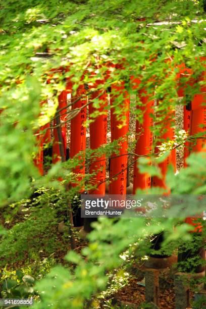 envuelta en el verde - hunter green fotografías e imágenes de stock