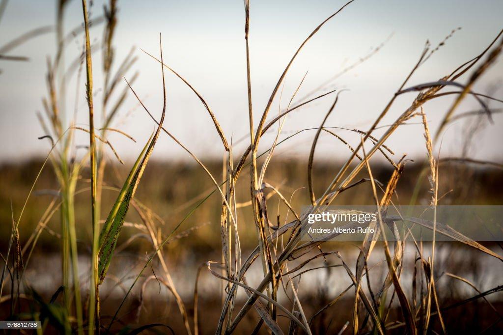 Shrubs in a lagoon : Stock Photo