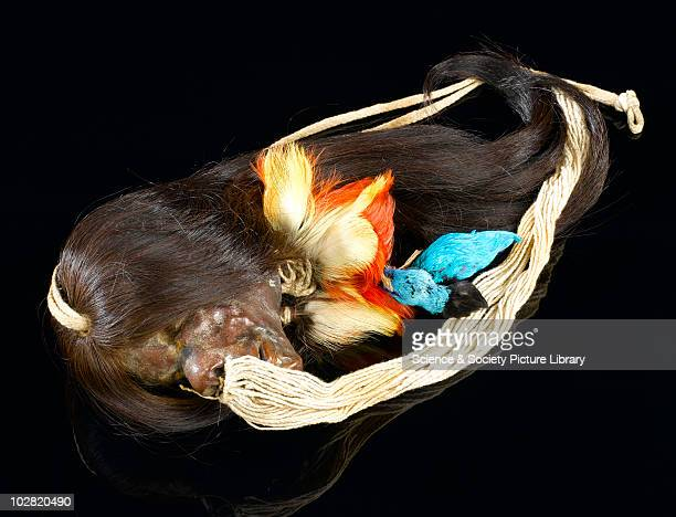 Shrunken head with long hair decorated with bird's heads by Jivaro tribe Ecuador Shrunken head with long hair decorated with bird's heads by Jivaro...