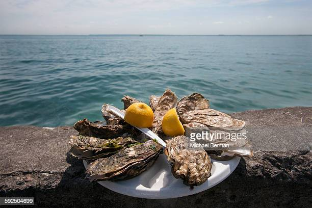 shucked oysters in france - cancale photos et images de collection
