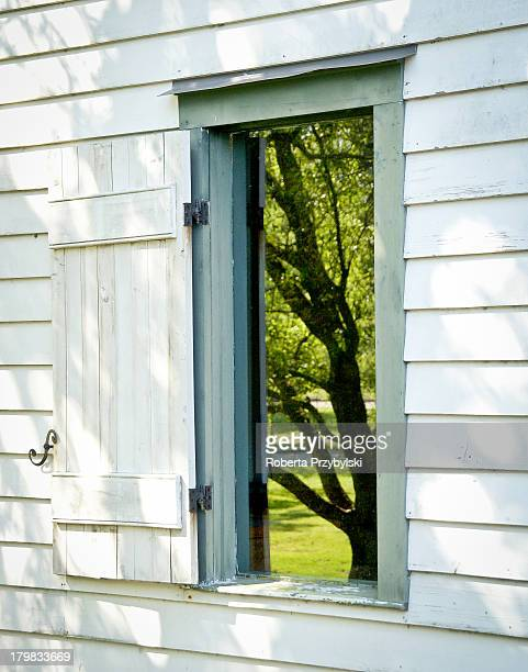shutter to the tree - lafayette louisiana stock pictures, royalty-free photos & images