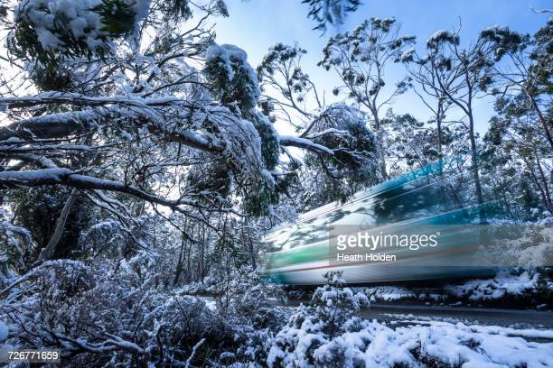 A shuttle bus travelling through the snowy trees in Tasmanias Cradle Mountain.