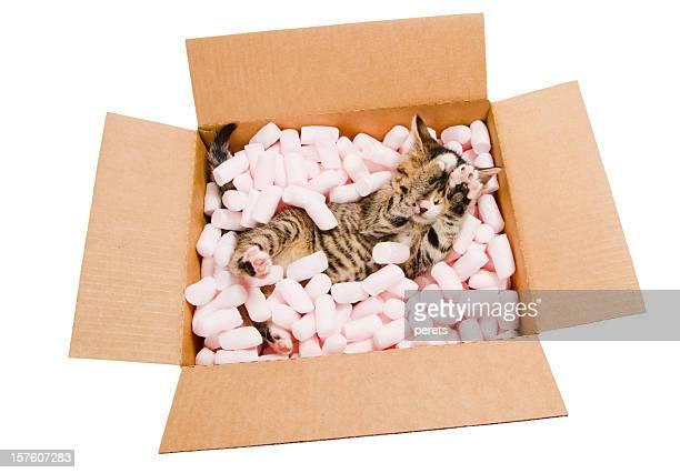 shy kitten in the box