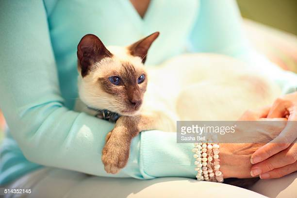 siamese cat sitting on woman's lap - siamese cat stock pictures, royalty-free photos & images