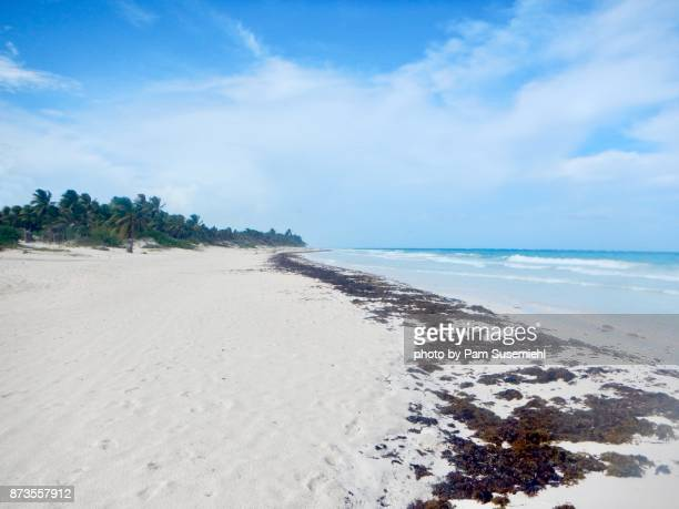 sian ka'an biosphere reserve, mexico - sian ka'an biosphere reserve stock photos and pictures