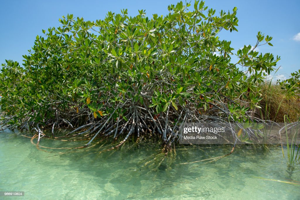 Sian Kaan biosphere reserve with mangroves : Stock Photo
