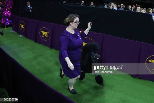 Siba a Standard Poodle enters the floor for the Best in Show competition during the Westminster Dog Show on February 11 2020 at Madison Square Garden...