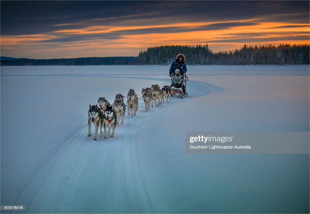 Siberian Huskies in a dog sled team at Lassbyn, Lapland, Sweden. : Stock-Foto