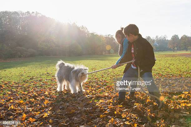 Sibling playing with a dog in a park in autumn