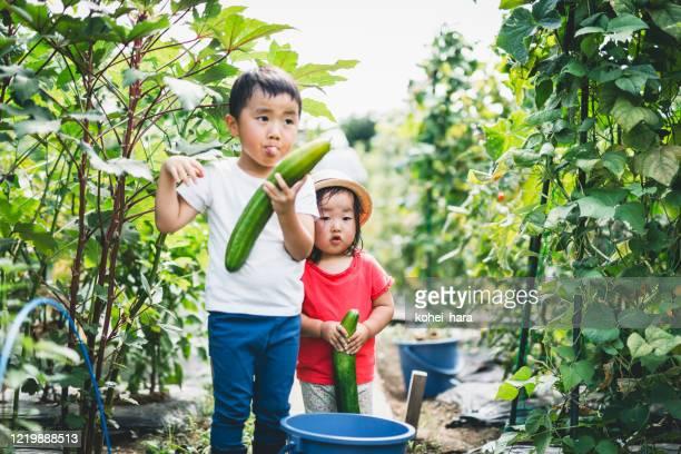 Siblings harvesting vegetables in the fields