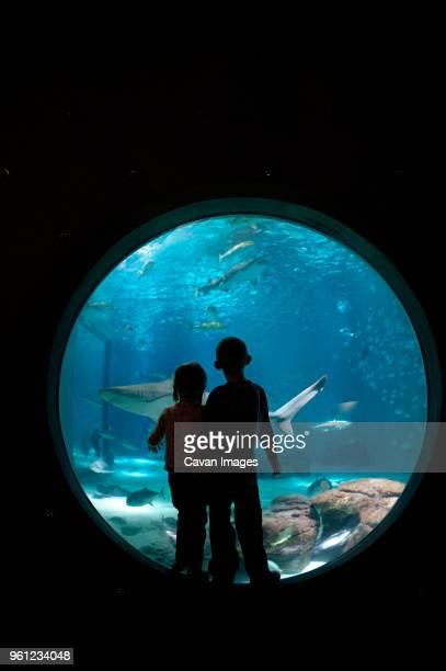 siblings looking at fish while standing in aquarium - fish love stockfoto's en -beelden