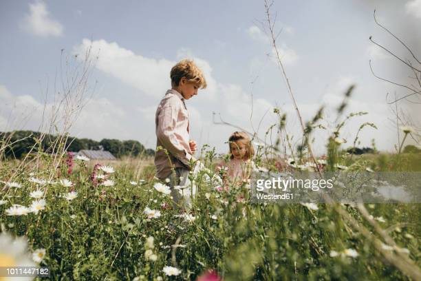 siblings picking flowers on a meadow - seres vivos fotografías e imágenes de stock