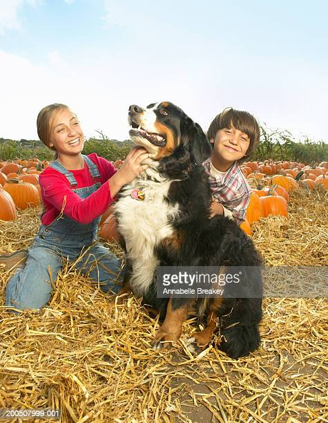 Siblings (10-14) playing with Bermese Mountain dog in pumpkin patch