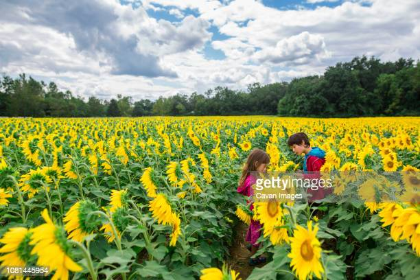 Siblings standing by sunflowers at farm against cloudy sky