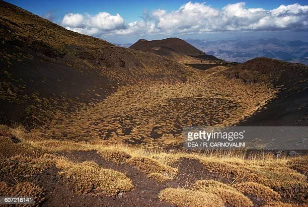 Sicilian Milkvetch shrubs above Piano Provenzana Mount Etna nature park Sicily Italy