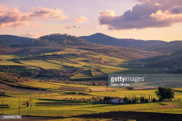 sicilian winter countryside - north stock pictures, royalty-free photos & images