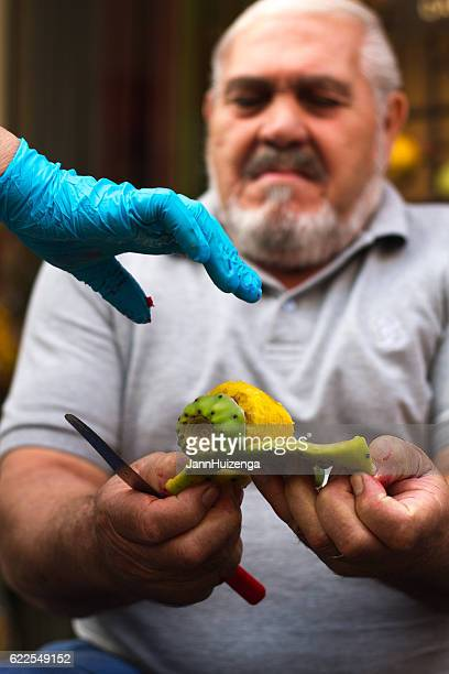 Sicily: Man Peeling Prickly Pear Fruit; Gloved Hand Reaching