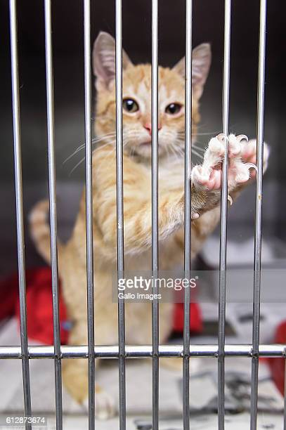 A sick cat in a cage seen at the Paluch animal shelter during World Animal Day on October 04 2016 in Warsaw Poland WAD is an international day of...