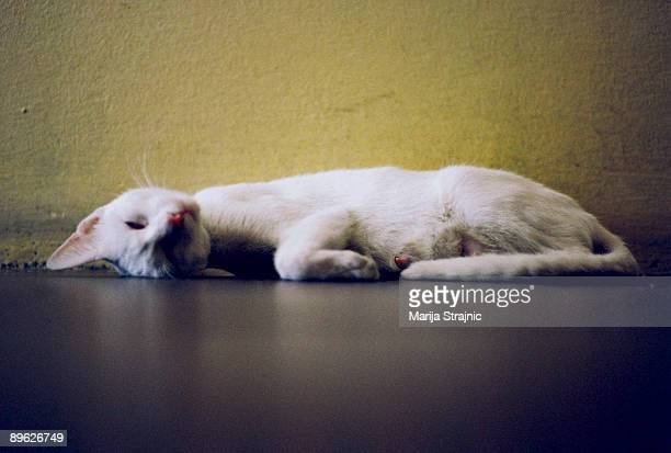 sick white cat sleeping - marija mauer stock-fotos und bilder