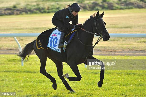 Side Glance from the United Kingdom during a trackwork session at Werribee Racecourse on October 1 2014 in Melbourne Australia