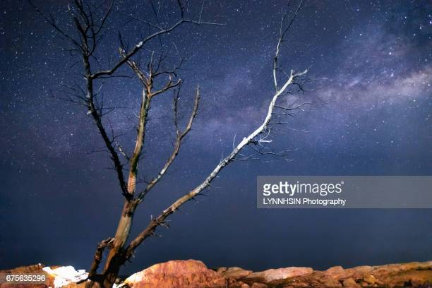 side lit old trees under the milky way - lynnhsin stock pictures, royalty-free photos & images