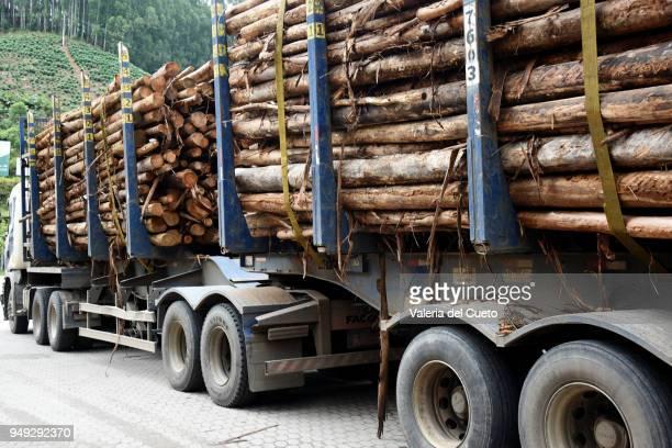 Side of bitrem, load of logs