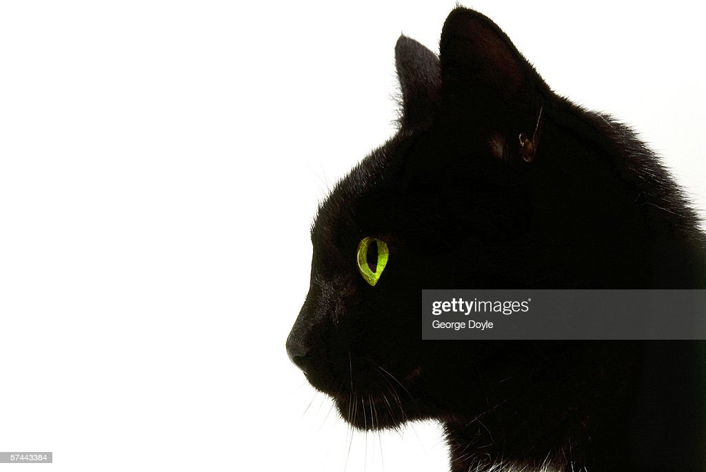 side profile of a black cat : Stock Photo