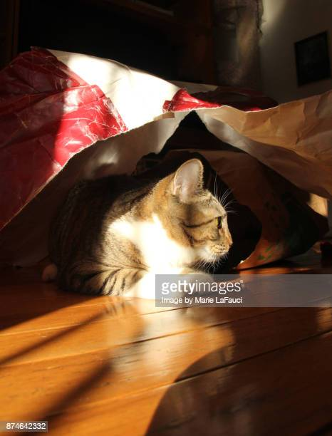 side profile of a cat under a torn shopping bag - marie lafauci stock pictures, royalty-free photos & images