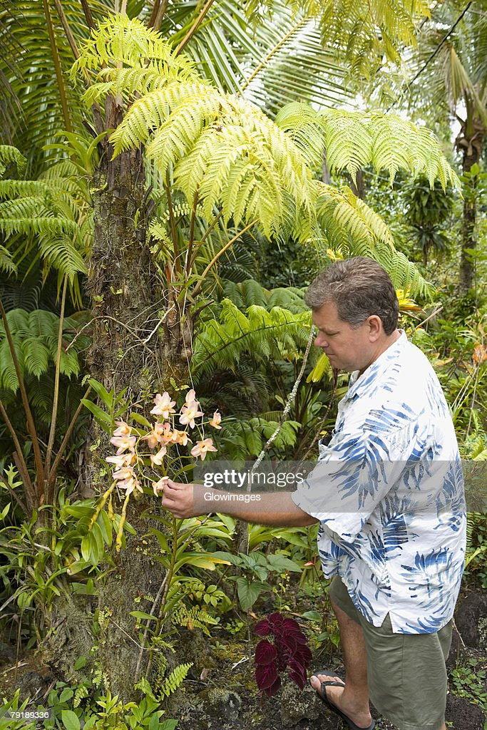 Side profile of a mid adult man touching flowers in a forest, Hilo, Big Island, Hawaii Islands, USA : Foto de stock