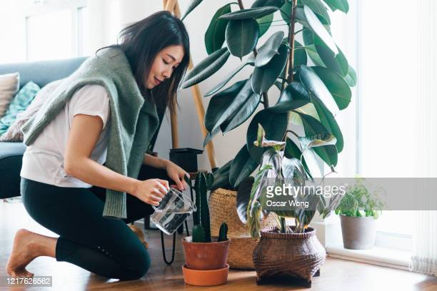 side profile of smiling woman watering potted plant at home - watering stock pictures, royalty-free photos & images