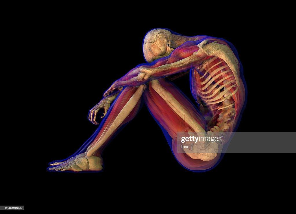 Seitenansicht 3 D Illustration Der Menschlichen Männlichen Anatomie ...