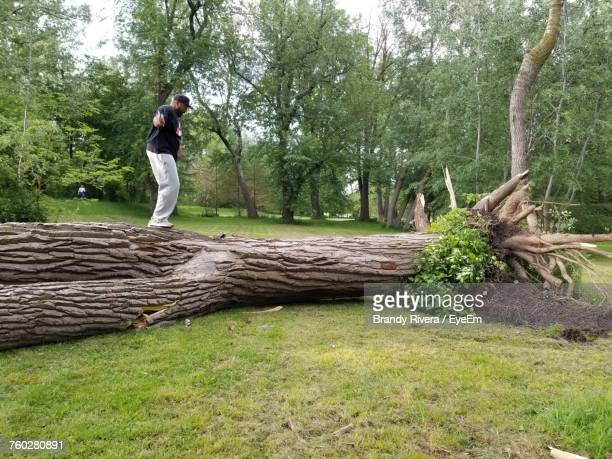 side view full length of man balancing on fallen tree at grassy field - fallen tree stock pictures, royalty-free photos & images