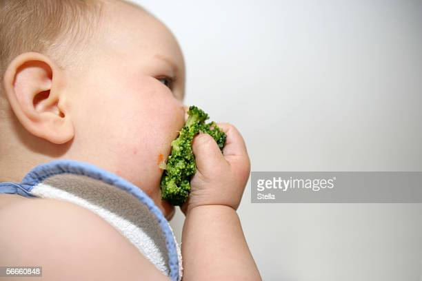 Side view of a baby eating broccoli