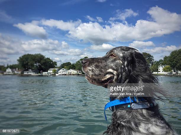 Side View Of A Dog In Water