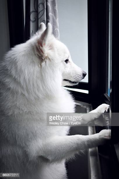 Side View Of A Dog Looking Through Window