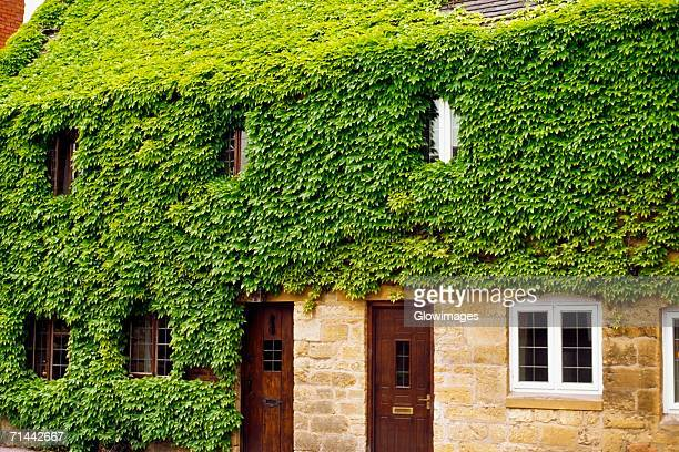 Side view of a house covered in green foliage, Broadway, England