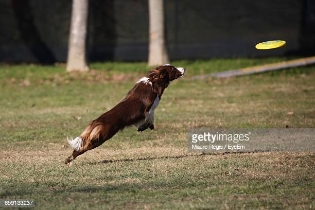 Side View Of A Jumping Dog