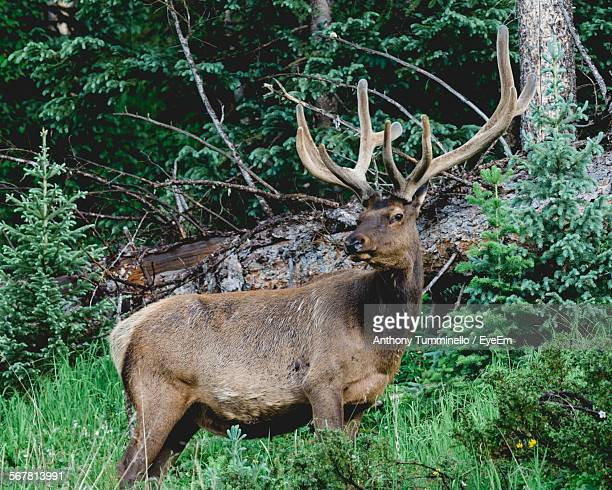 Side View Of A Reindeer Against Plants