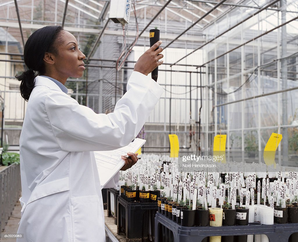 Side View of a Scientist Examining a Potted Plant in a Greenhouse : Stock Photo