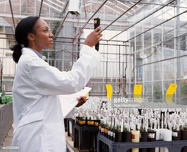 side view of a scientist examining a potted plant in a greenhouse - wissenschaftlerin stock-fotos und bilder