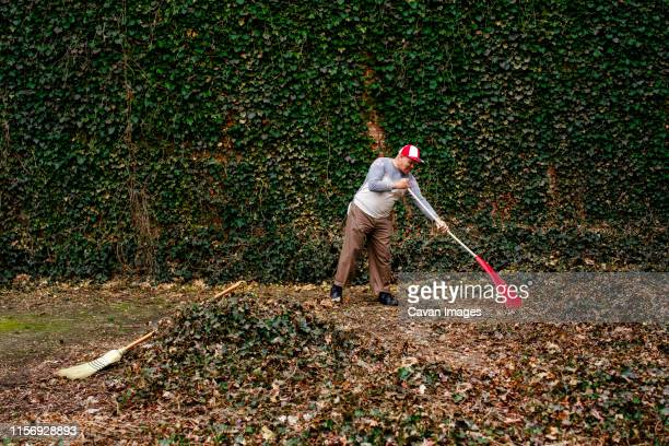 side view of a senior man carrying a red rake in front of an ivy wall - rake stock pictures, royalty-free photos & images