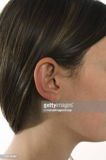 Side view of a woman's head