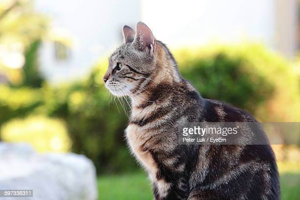 Side View Of Alert Cat Outdoors