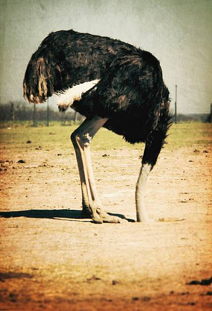 Side View Of An Ostrich On Landscape Wall Art