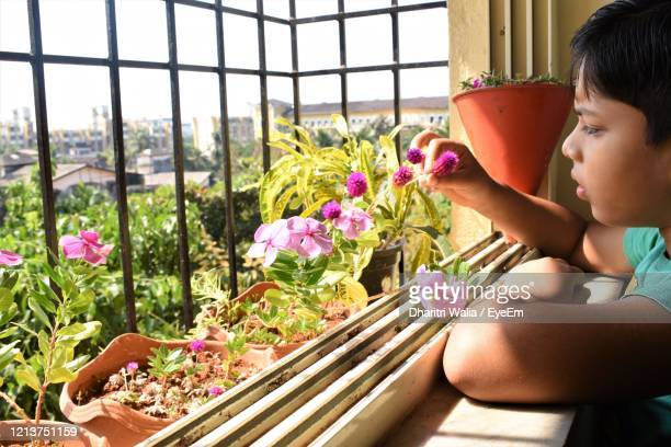 side view of baby boy sitting on window sill - magnoliophyta foto e immagini stock