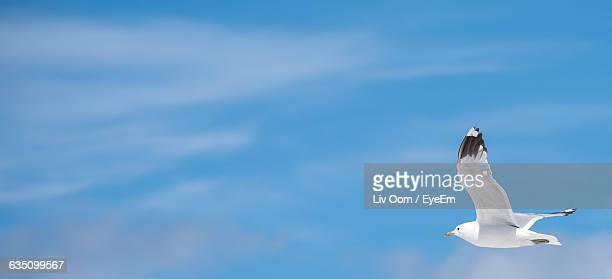 Side View Of Bird Flying Against Blue Sky