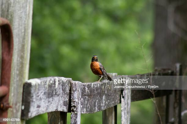 Side view of bird on wooden fence against blurred background