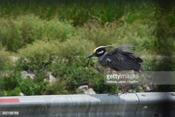 side view of bird perching on railing - lopez stock pictures, royalty-free photos & images