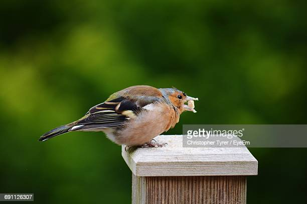 Side View Of Bird Perching On Wooden Pole