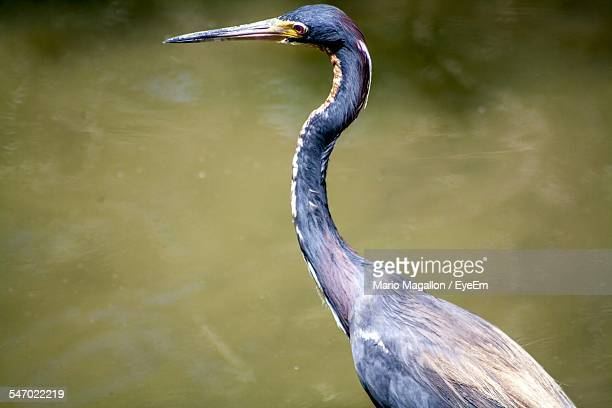 side view of bird with long neck - long neck animals stock pictures, royalty-free photos & images